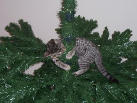 kitten carolina in tree compressed